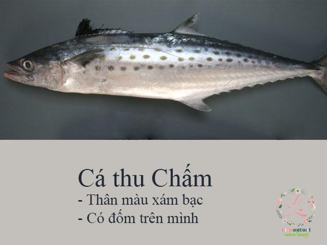 Cá thu Chấm