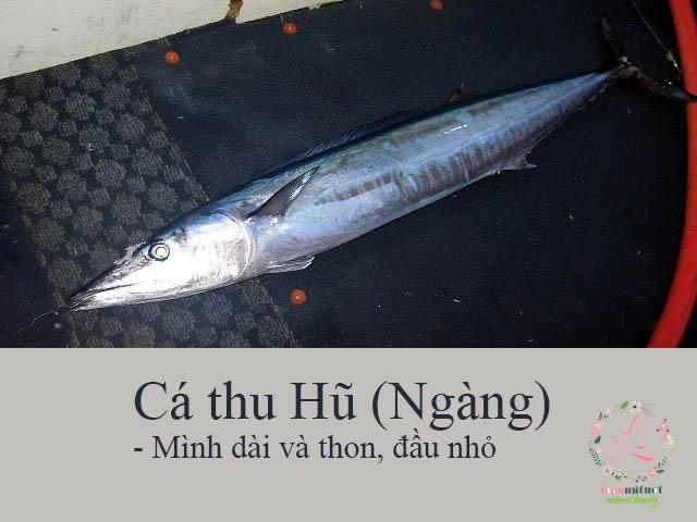 Cá thu Hũ (Ngàng)