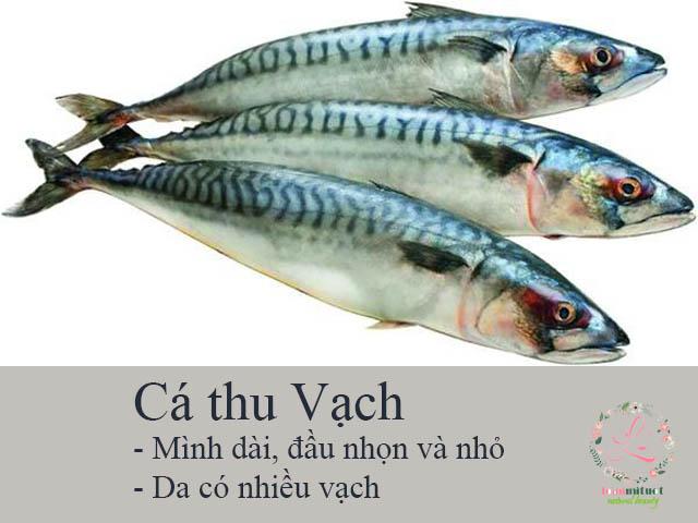 Cá thu Vạch