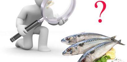 Cách chọn cá thu tươi ngon cực chuẩn bằng mắt thường